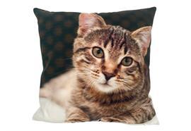 Kissen mit Katze Motiv  mit Reisverschluss  Grösse: 40cmx40cm  Digitaldruck einseitig