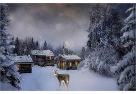 LED Bild aus Canvas B:60cm Motive: Hirsch im Wald 6 LED + 40 Fibre Optics