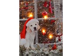 LED Bild aus Canvas Motiv: Hund am Fenster 4 LED