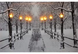 LED Bild aus Canvas - Motive: Verschneite Allee - 8 LED  B: 60cm x H: 40cm x T: 1.8cm